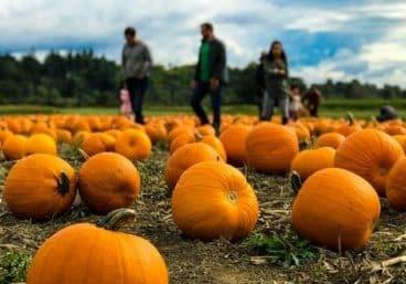 fall activities- pumpkin patch
