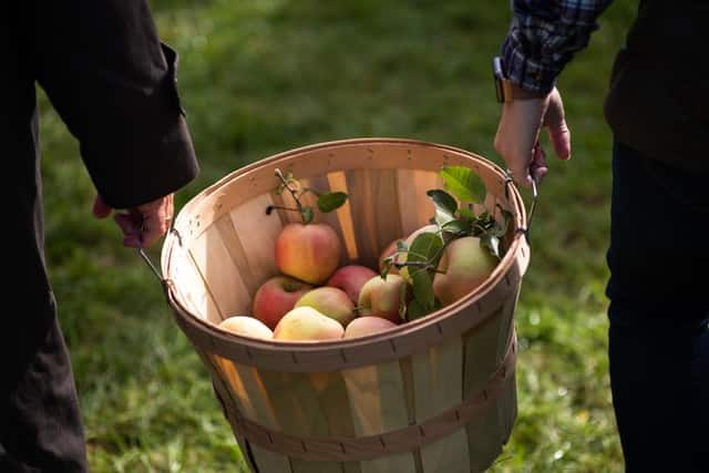 fall activities- apple picking